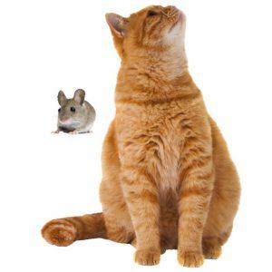 Muursticker farm family kat en muis