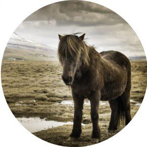 muursticker dot paard